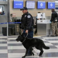 America Airline Security
