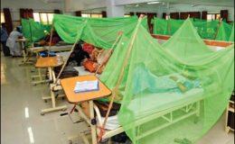 پنجاب : مزید 559 افراد میں ڈینگی وائرس کی تصدیق