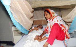 پنجاب میں ڈینگی سے ہلاک ہو نے والوں کی تعداد دس ہو گئی