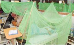 پنجاب میں ڈینگی کے مریضوں کی تعداد 3300 تک جا پہنچی