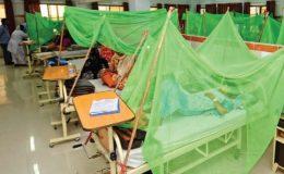 لاہور میں ڈینگی بخار وبائی شکل اختیار کر گیا