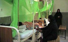 خیبر پختونخوا میں ڈینگی بخار نے دو افراد کی جان لے لی