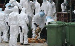 چین میں برڈ فلوسے ایک شخص ہلاک