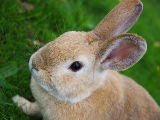خرگوش فارم سے بے روزگاری میں کمی