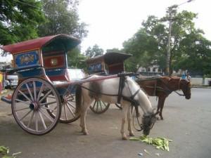 horse with tanga