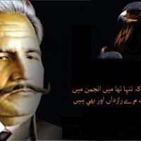 allama iqbal aur shaheen