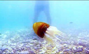 یونانی سائنسدانوں نے تیرنے والا روبوٹ آکٹوپس تیار کرلیا