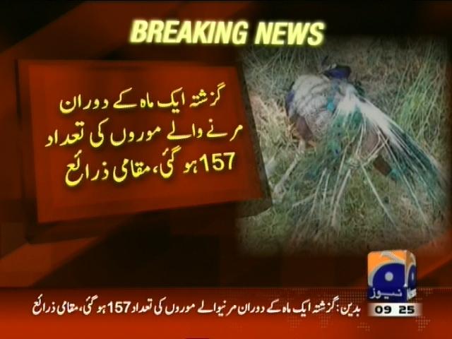 Tharparkar Peacock Died– Breaking News – Geo