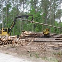Harvesting Forests