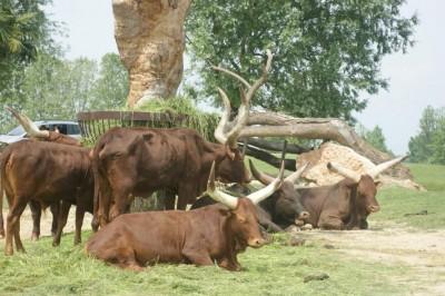 Safari Park  Animals