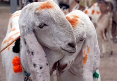 Eid Al Adha Sacrifice