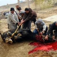Eid Sacrifice