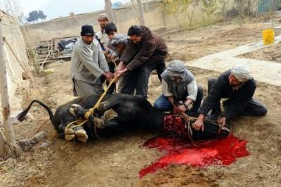 Sacrifice Eid ul Adha