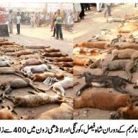 Dog Killed Campaign