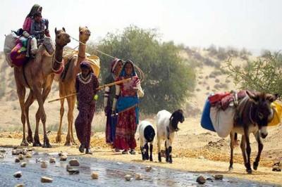 Tharparkar Migration