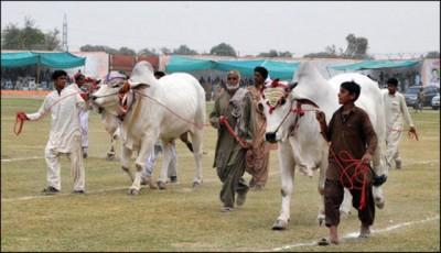 Sibbi Festival