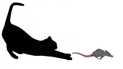 Cat Catch Rats