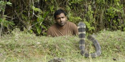 Snake and Man