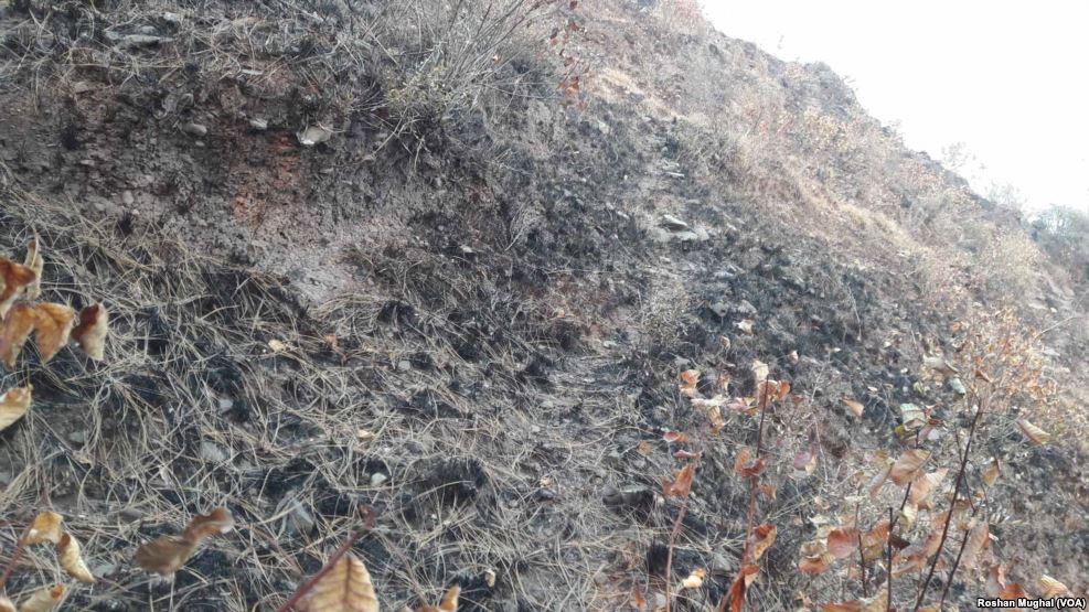 پاکستانی کشمیر: جنگل کی آگ سے جنگلی حیات اور مقامی آبادی متاثر