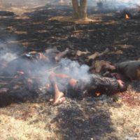 Myanmar Muslim Killing