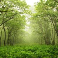 Changa Manga Forest