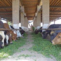 Livestock Farmers