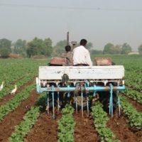 Pakistan Farmers