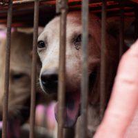 Dog Killing Campaign