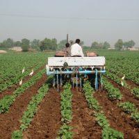 Pakistan Agriculture