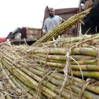 Farmers - Sugarcane